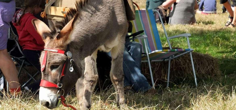 TTDA - FolkEast - Donkey by Kathy Baxendale