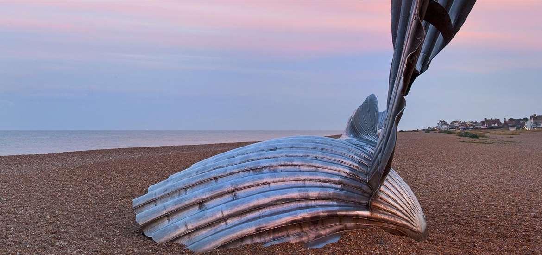 TTDA - Aldeburgh Beach - Scallop