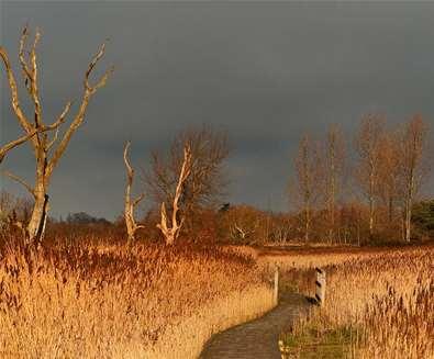 Winter Walks on the Suffolk Coast