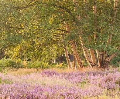 Suffolk Heaths Landscape Photography..
