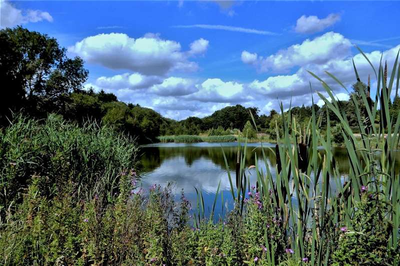 Towns & Villages - halesworth - fishing lakes