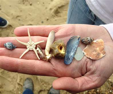 Beachcombing on Dunwich Beach