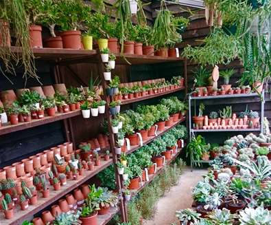 Urban Jungle Plant Nursery..