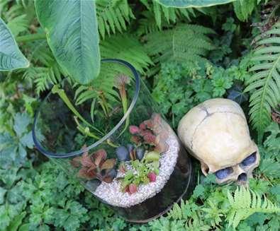 Carnivorous Terrarium Workshop and Talk at Urban Jungle in Beccles