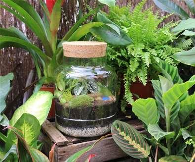 Jungle Terrarium Workshop