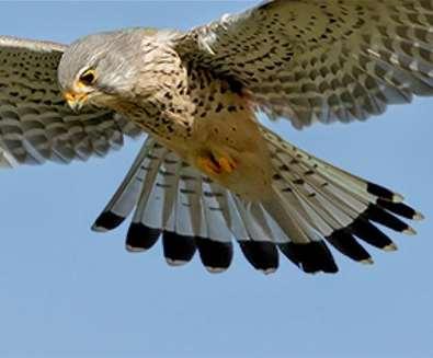 Birds of Prey at Carlton Marshes
