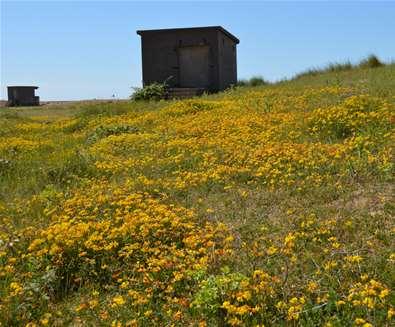 Landguard Peninsula 1 - credit Visit Felixstowe