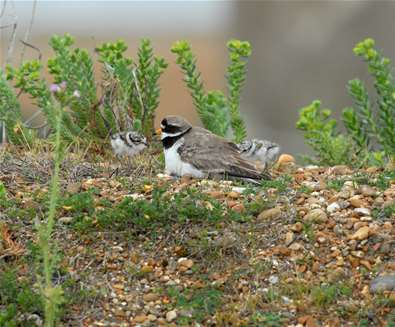 Feed the Birds and give the Birds a Home - Landguard Nature Reserve