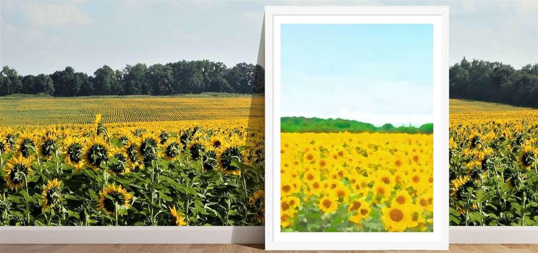 TTDA - Studio byAbi - sunflowers