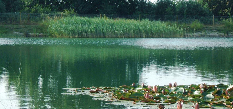 Mill Hill Farm Pond