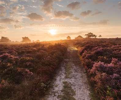 Early Morning Birdsong Walk