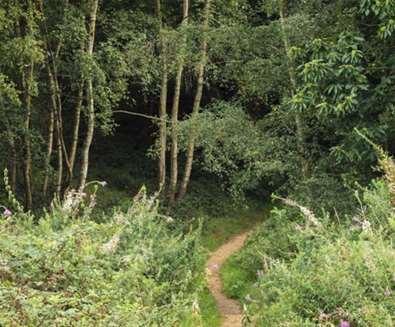 TTDA - National Trust Dunwich Heath - Forest
