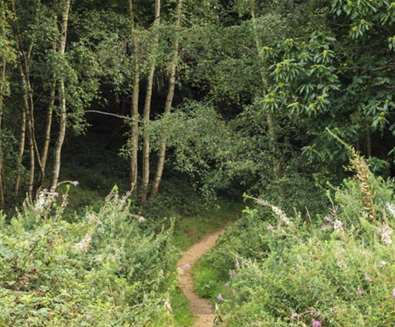 TTDA - National Trust Sutton Hoo - Woodland