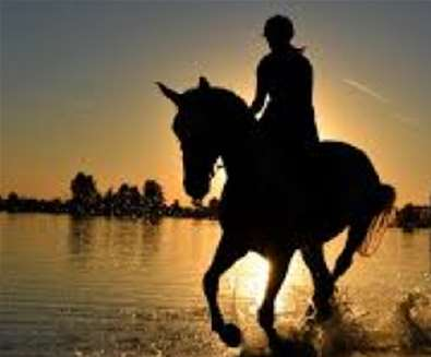 Equine & Human, Train & Pain at The Cut, Halesworth