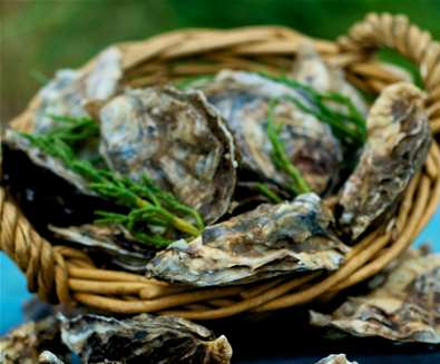 Articles - 8 Reasons to Visit The Suffolk Coast in Winter - Pinneys Oysters