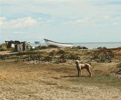 TTDA - Sizewell Beach - Dog on beach