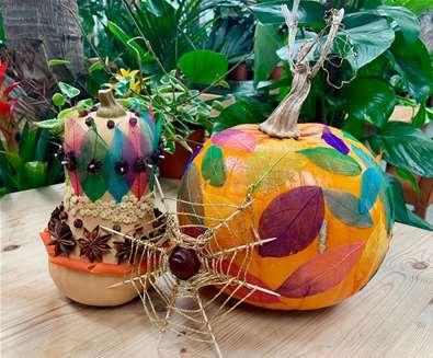 Jazz Up Your Jungle Pumpkin at Urban Jungle