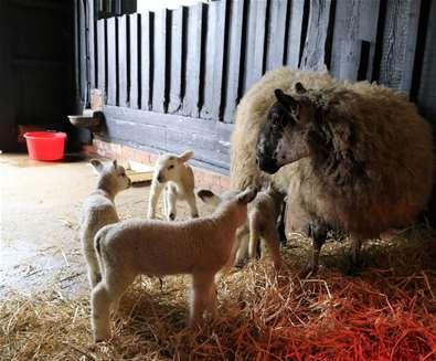 Ewe won't believe your eyes!