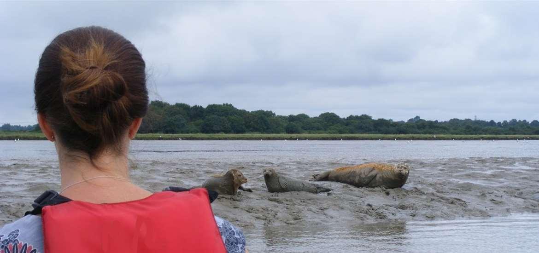 Iken Canoes - Seals - Attractions