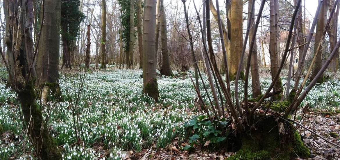 Articles - 6 Things for Spring - Snowdrops