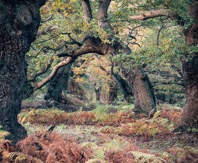 Autumn Woodland Photography Workshop