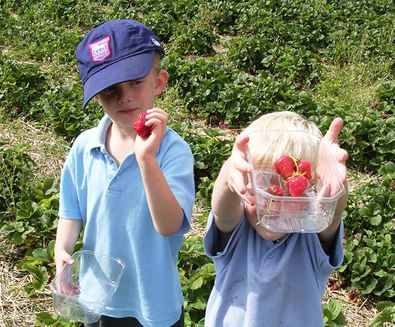Pick Your Own on The Suffolk Coast