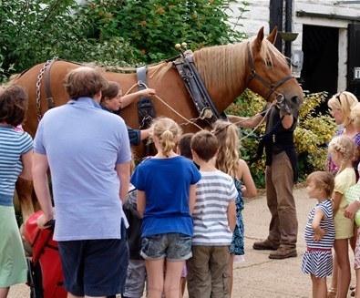 Suffolk-Punch-Trust-Horse-in-Harness