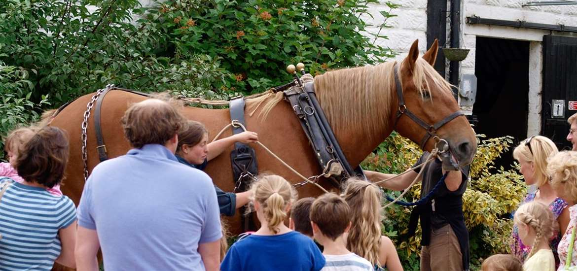 TTDA - The Suffolk Punch - Horse in Harness