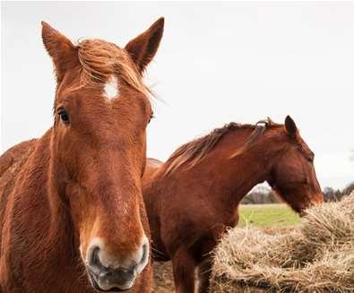 TTDA - Suffolk Punch Trust - Horses