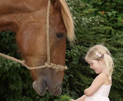 Suffolk Punch Trust Horse with Girl