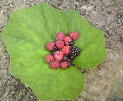 Rendlesham Forest - Summer Wild Forest foods