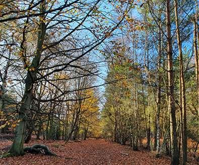 Sutton Heath in Autumn (c) Annie Willey