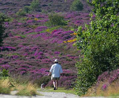 TTDA - National Trust Dunwich Heath - Forest