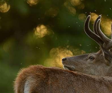 TTDA - RSPB Minsmere - stag close up - (c) Ben Andrew