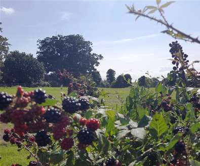 Things to Do - Blackberrying on the Suffolk Coast