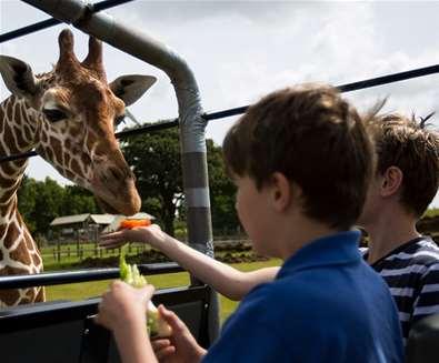 TTDA - Africa Alive - Children with giraffe