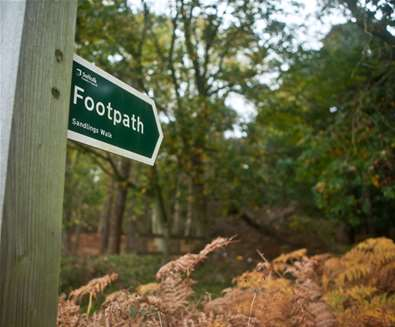 Dunwich Forest - Emily Fae Photography