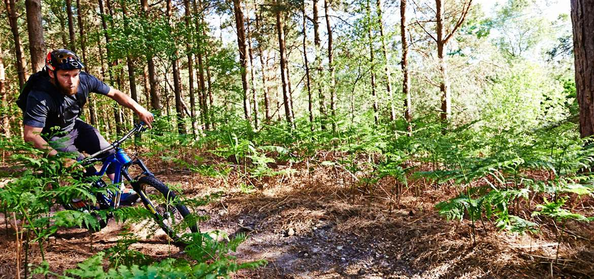 Forest Cycling-credit-Adrian Green