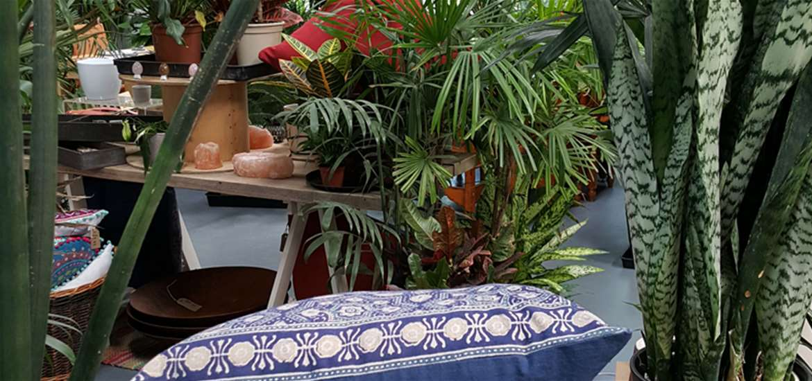 TTDA Urban Jungle Housewares and Exotic Plants