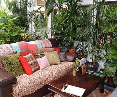 FD - Urban Jungle Cafe - Sofas