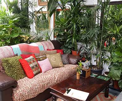 FD - Urban Jungle Cafe - Sofa