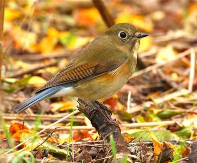 Bird identification courses at..