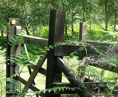Walberswick to Westleton - Cycle Trail - Angels & Pinnacles