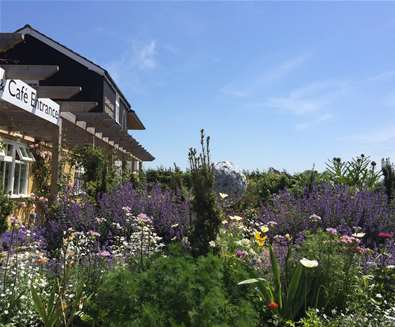 TTDA - Darsham Nurseries - Garden