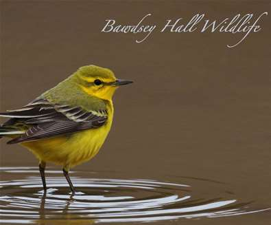 Bird identification courses at Bawdsey Hall - Spring birds (including birdsong)