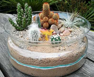Create a Cactus Garden at Urban Jungle