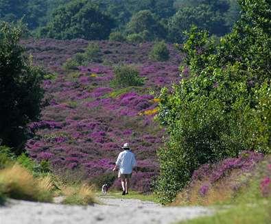 National Trust Dunwich Heath