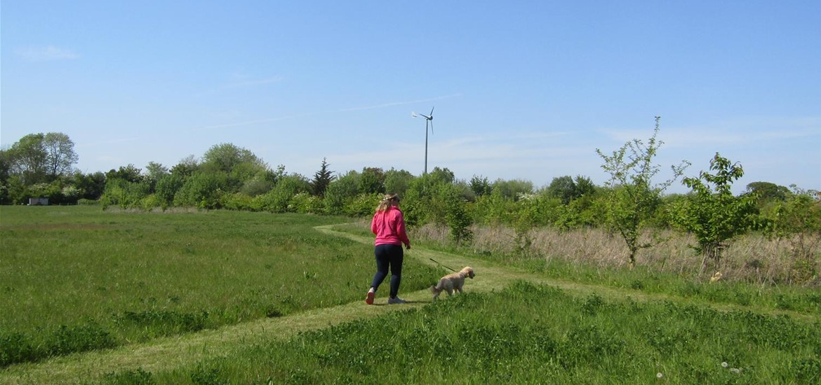 One of the dog walking areas
