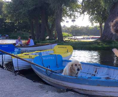 Top 10 Dog Friendly Things to Do - Dog in Boat at Thorpeness