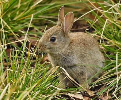 TTDA - RSPB Minsmere - Bunny